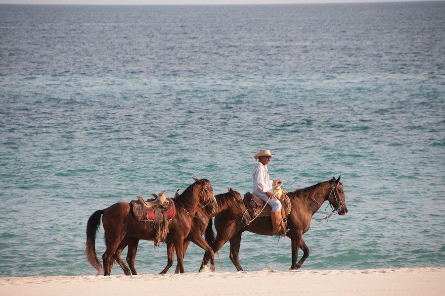 horses Mexico